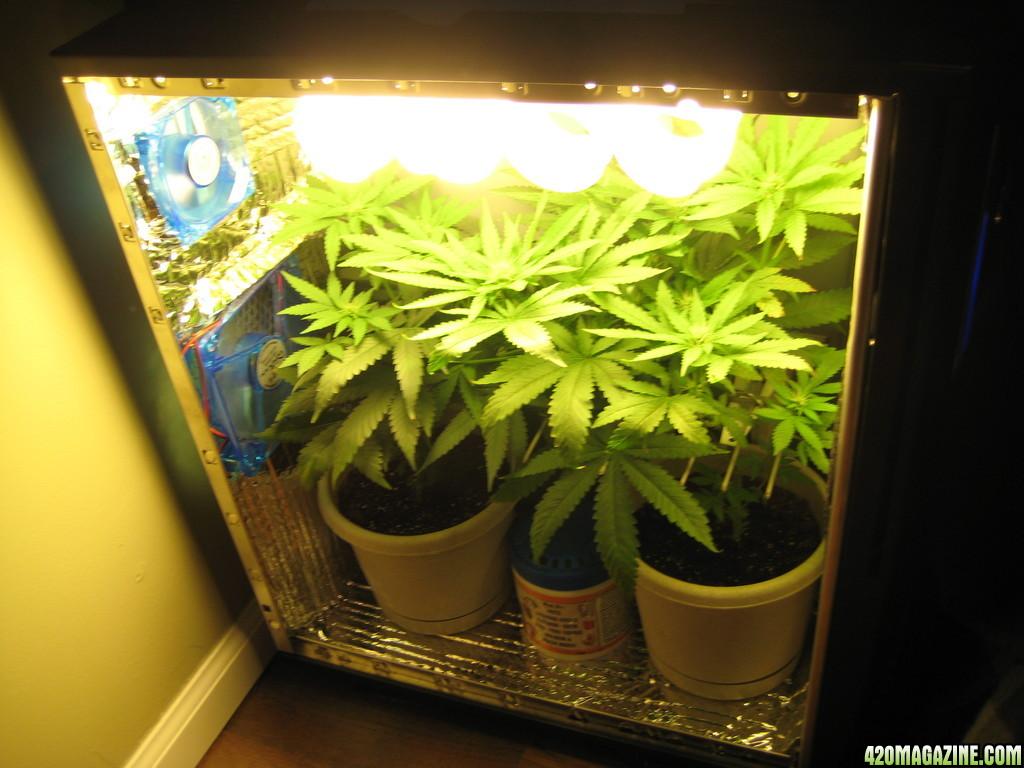 Гроубоксы для выращивания травы 528