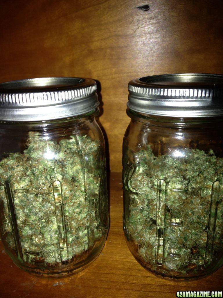 Ounce Of Weed Mason Jar Royale Haze Soil 150w ...