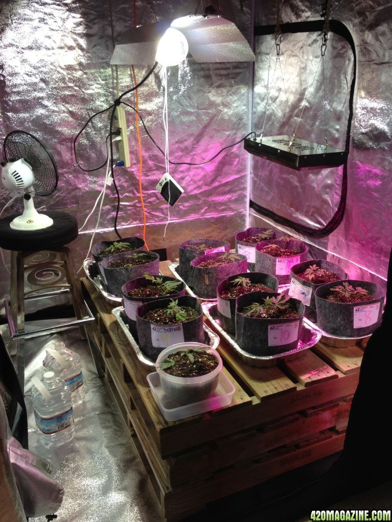 Savory S 5x5 Cherry Pie Grow Tent