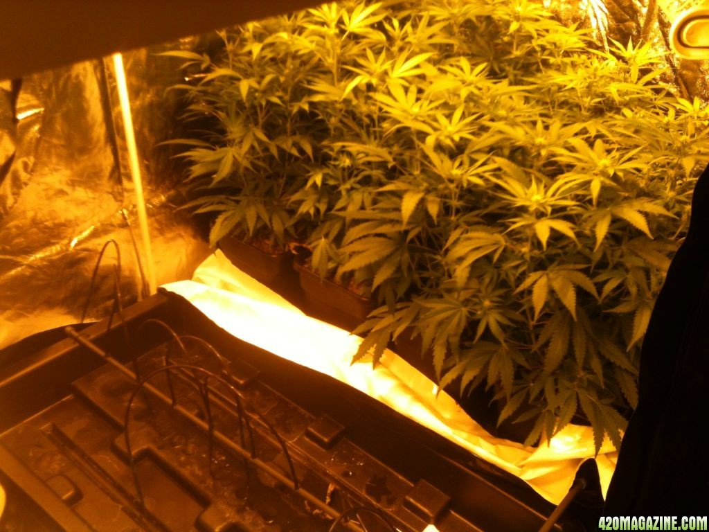 16 Pot Wilma System Hydro Page 4