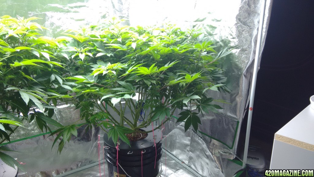 show me your t5 fluorescent light grow page 2. Black Bedroom Furniture Sets. Home Design Ideas