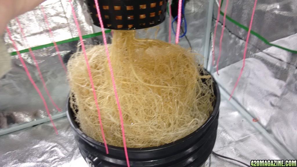 Dwc Net Pot Size
