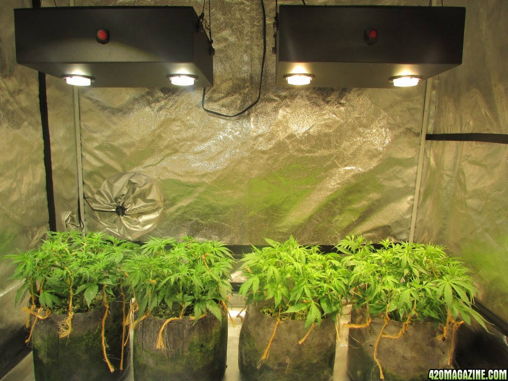 Indicas Led Garden Page 2
