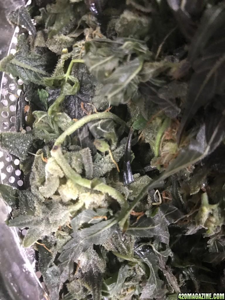 Can You Dry Marijuana In A Food Dehydrator