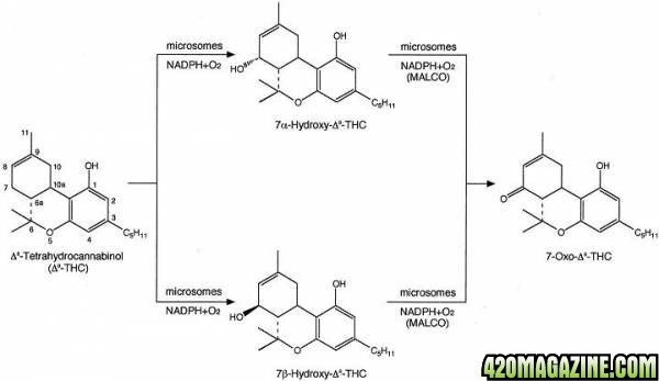 Isomerisation_2.jpg