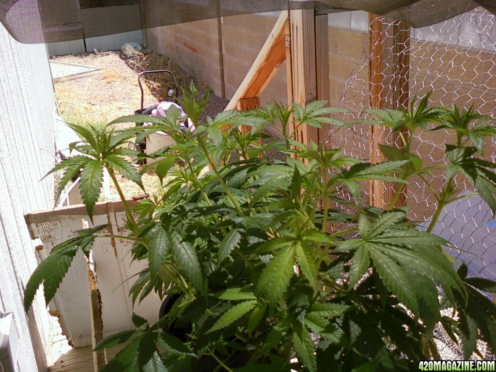 Jack_Herer_and_Church_plants_0112.jpg