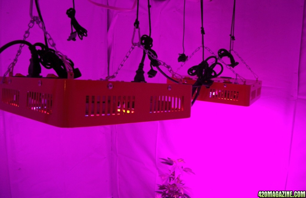 KingJohnC_s_Green_Sun_LED_Lights_Znet4_Aeroponic_Indoor_Grow_Journal_and_Review_2014-08-28_-_002.JPG