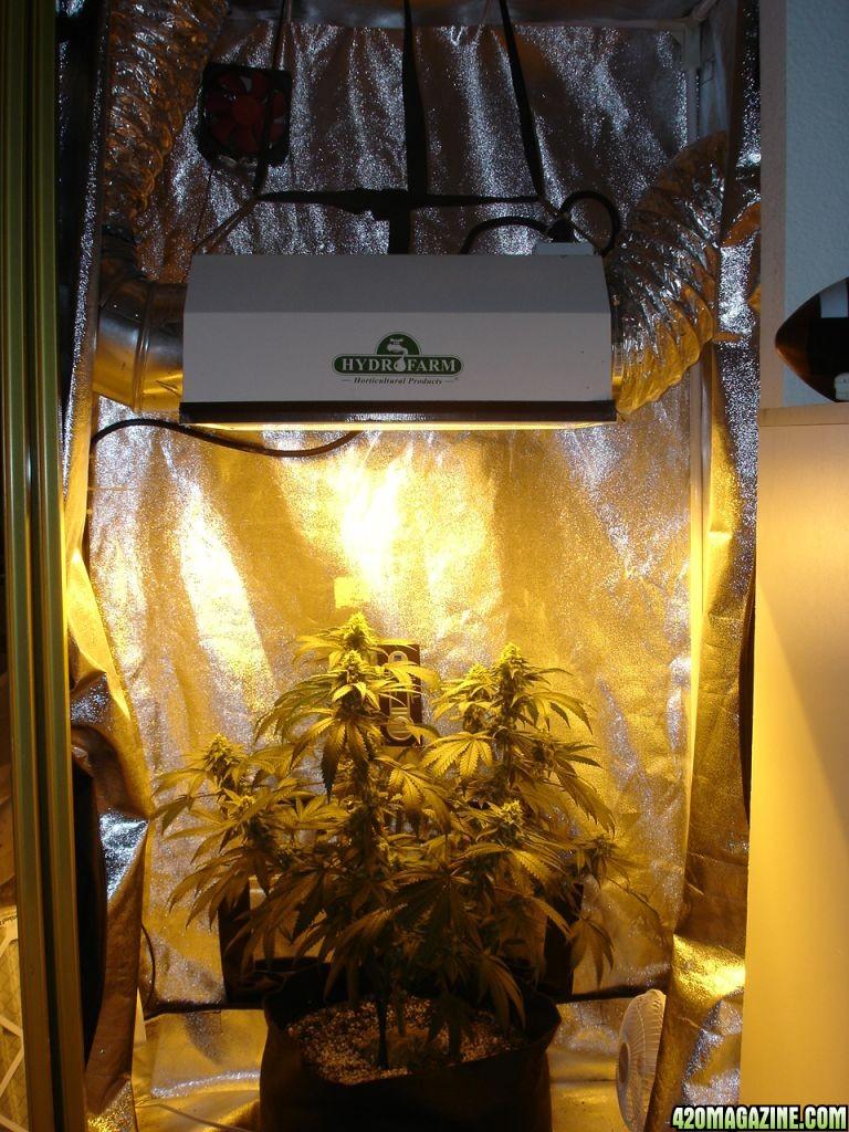 Grow Closet Soil Home Decor