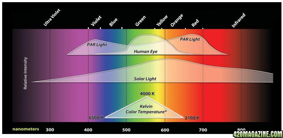 Fluorescent light spectrum chart