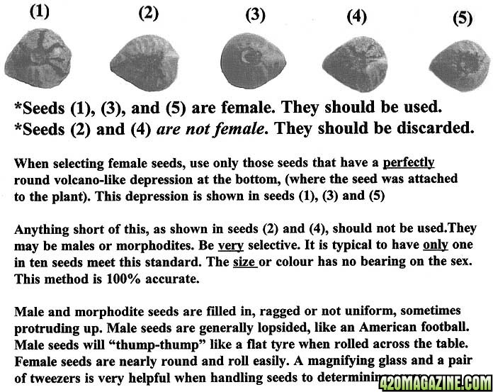 Male_or_female_seeds.jpg