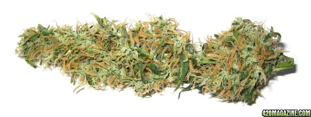 Marijuana_big.jpg