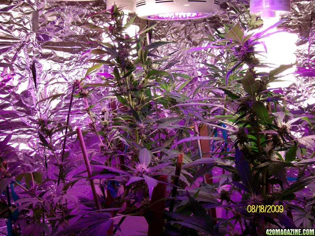 Led Ufo Cfls 496w Grow 420 Magazine