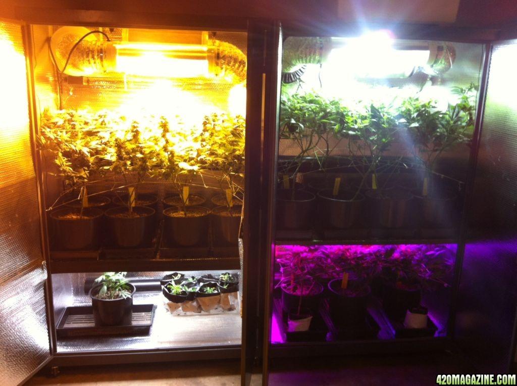 Best Indoor Grow Box