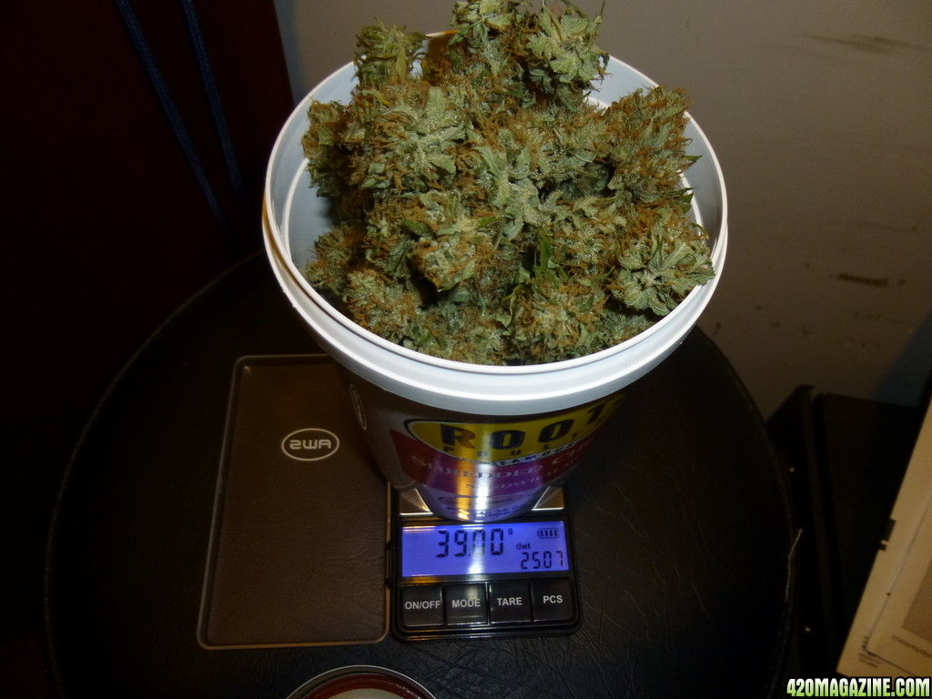 40 g of weed