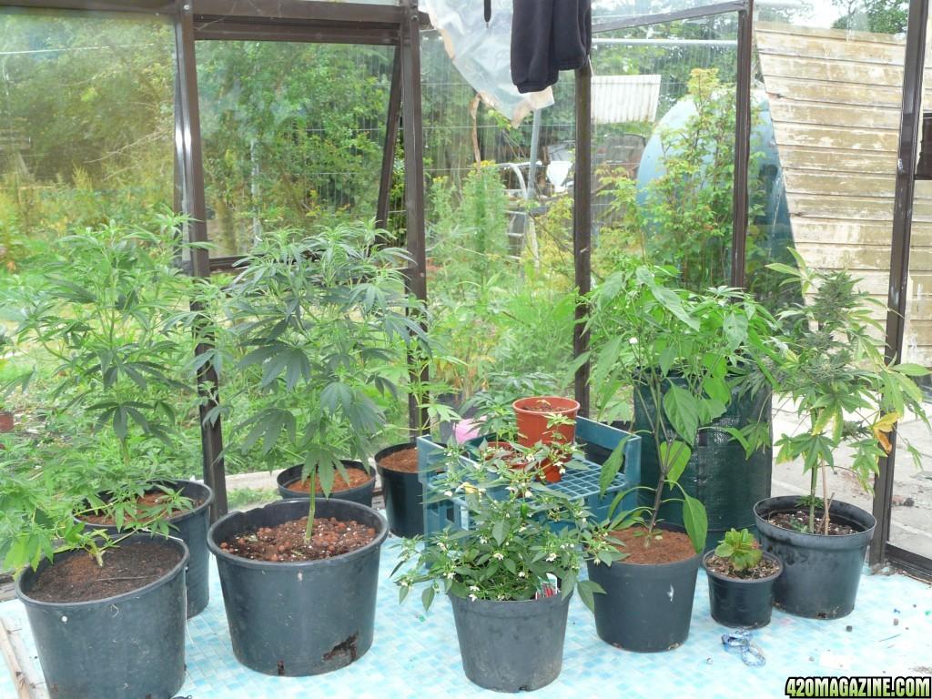 how to grow indoor outdoor