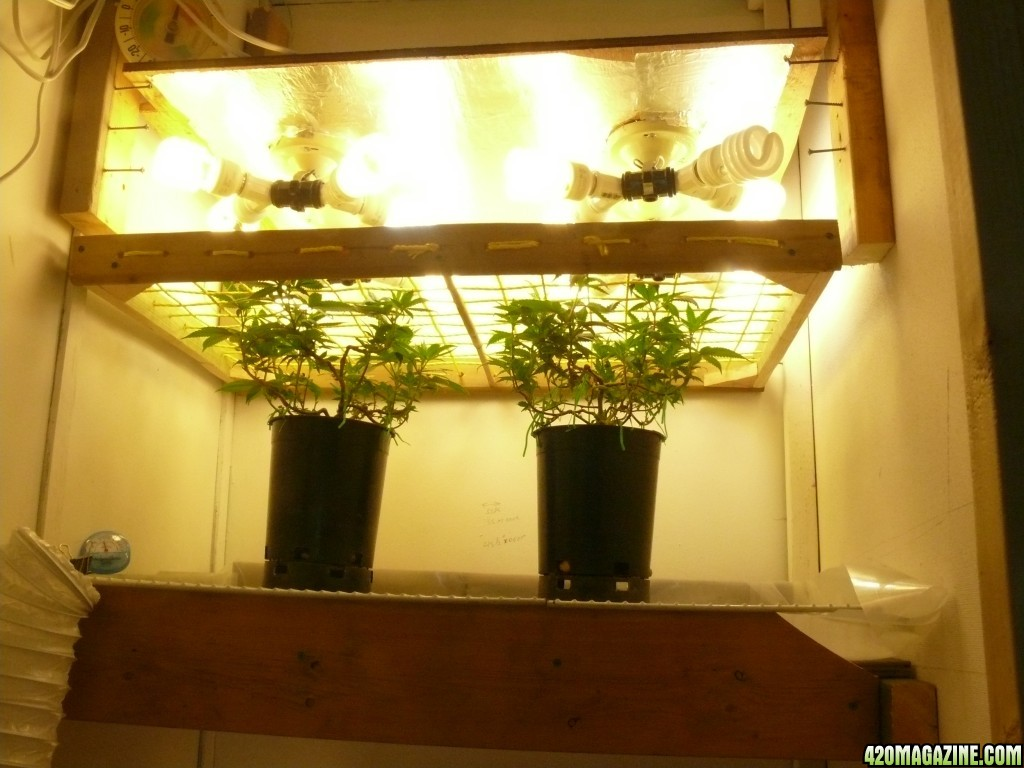 Nivek 39 S Need To Know Nature First Grow Journal 2015
