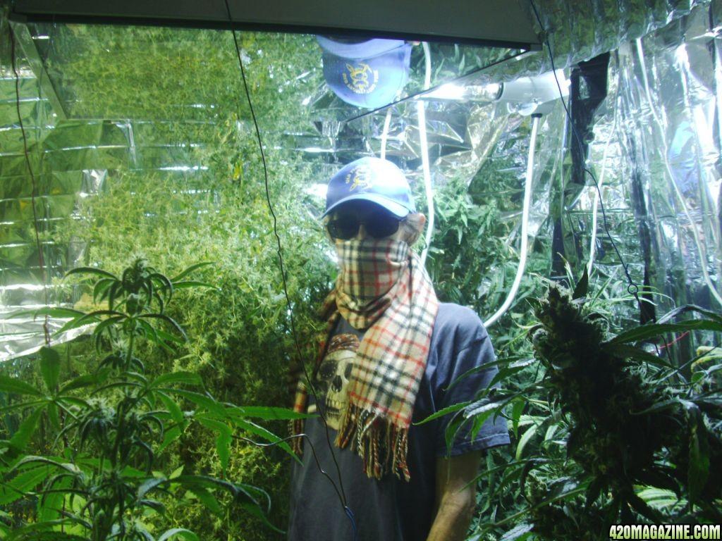 Pans Aero Garden Super Lemon Haze More Page 27Aero garden weed. Aerogarden Cannabis Harvest. Home Design Ideas