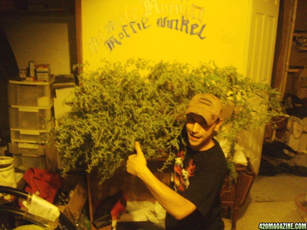 Re  Pan s Aero Garden  Super Lemon Haze    MorePan s Aero Garden  Super Lemon Haze    More   Page 27. Aerogarden Cannabis Harvest. Home Design Ideas