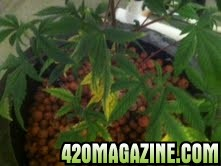 Plant79.jpg