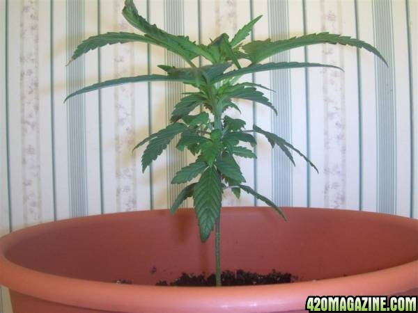 Plant_2_side_9-13-07_Large_.jpg