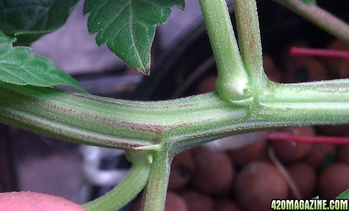 Plant_510.jpg