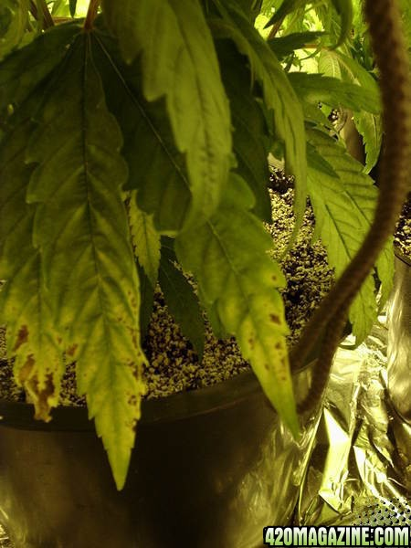 Plants2_26010.jpg
