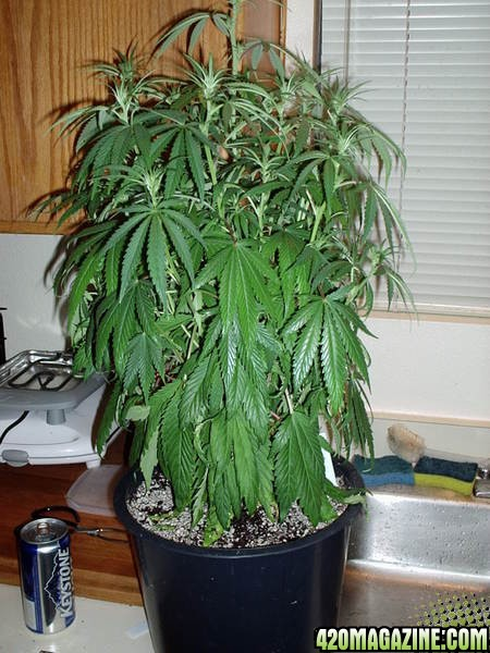 Plants3-6-060031.jpg