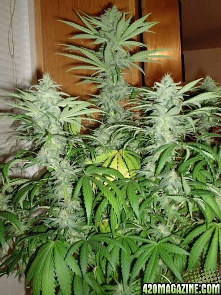 Plants4-10-060351.jpg