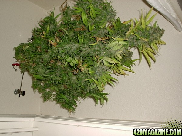 Plants4-30-060051.jpg