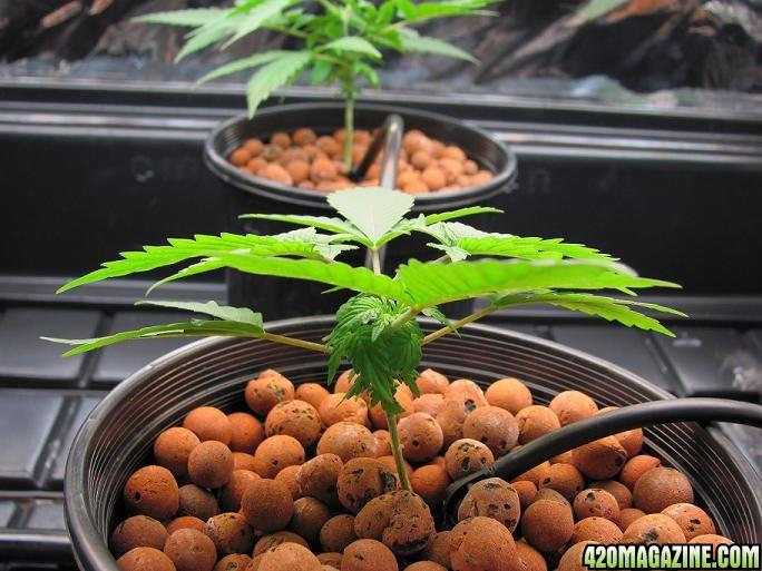 Plants_4a1.jpg