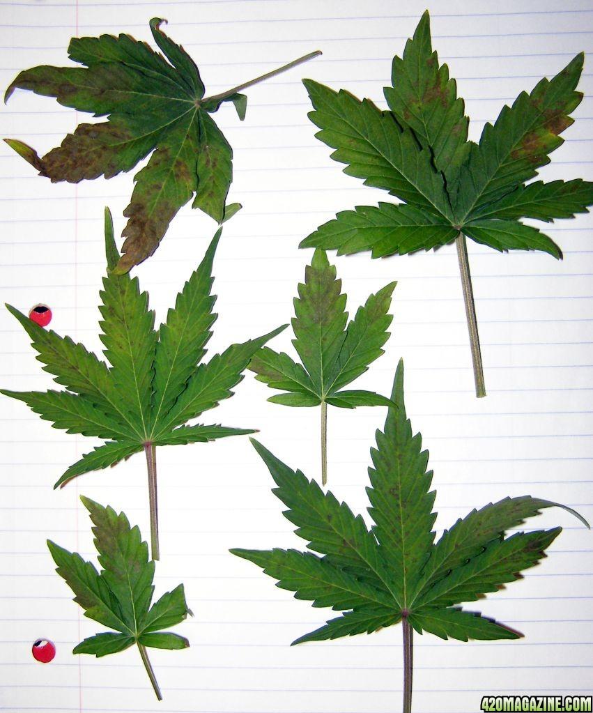 Problem_leaves.jpg