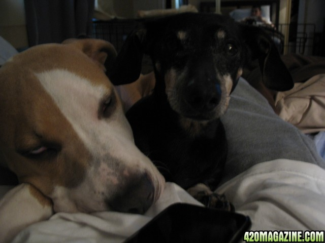 Puppies_.JPG