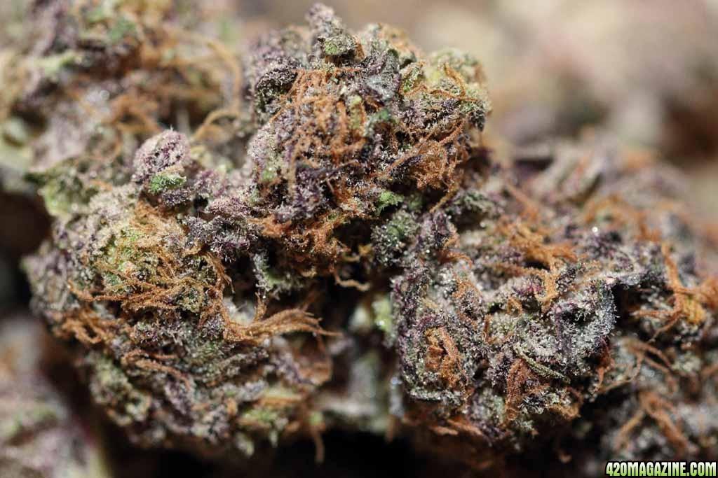 Re Purple Kush