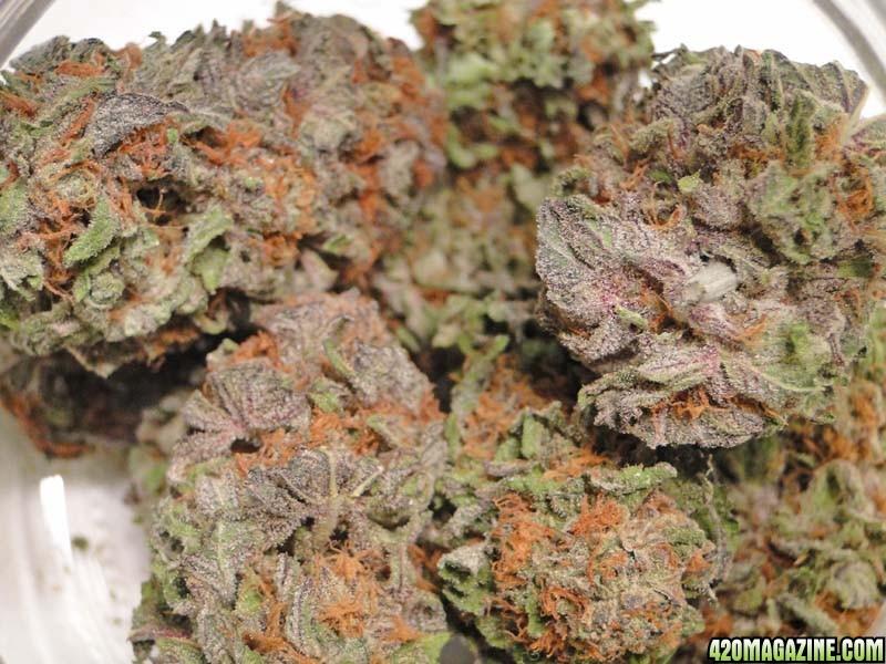 Purple_Kush_new1.jpg