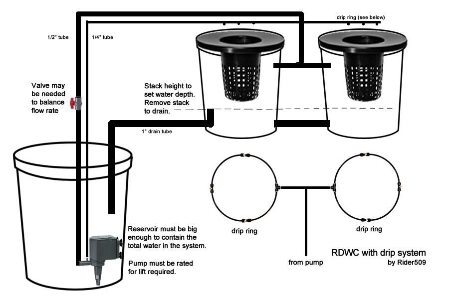 Help with Tri-Foliate seedlings! Recirculating DWC | 420 Magazine ®