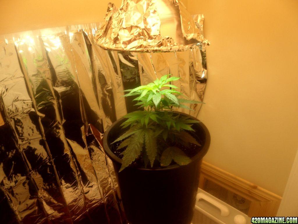 how to grow reggie in a closet
