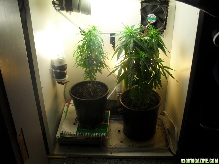 Гроубоксы для выращивания травы 321