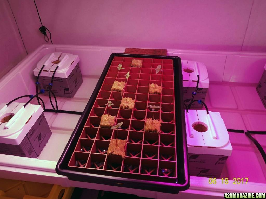Seedlings71.jpg