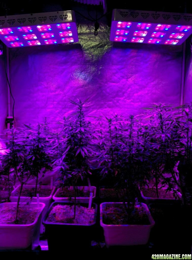 100 marijuana grow lights marijuana grow lights led hps cfl