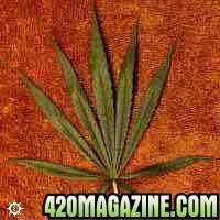 cannabis_sativa_columbian.jpg