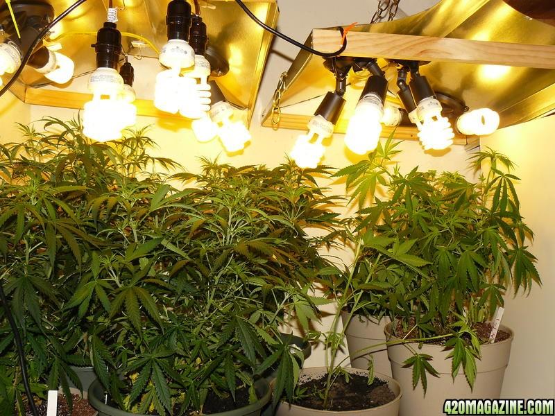 Какая лампа нужна для выращивания 45