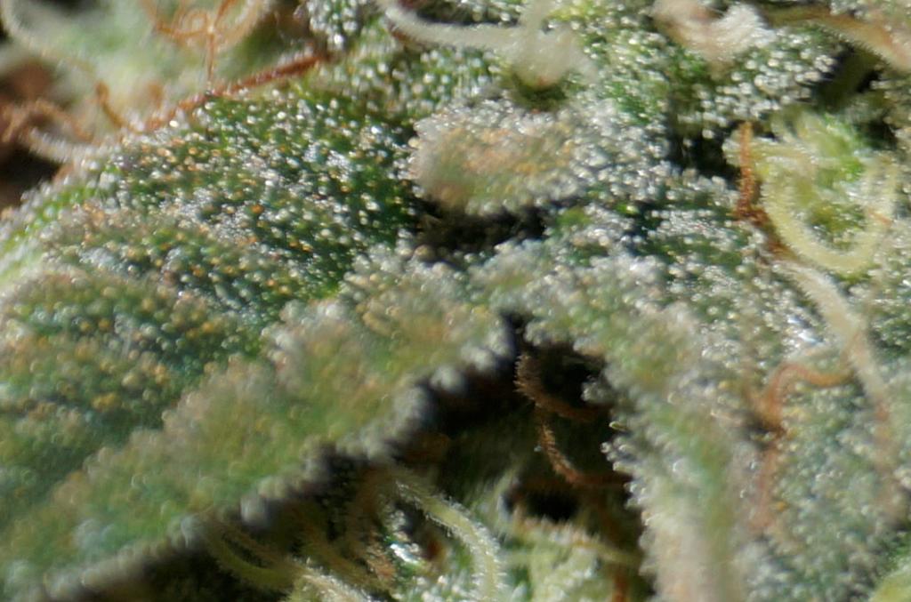 closeup2.PNG