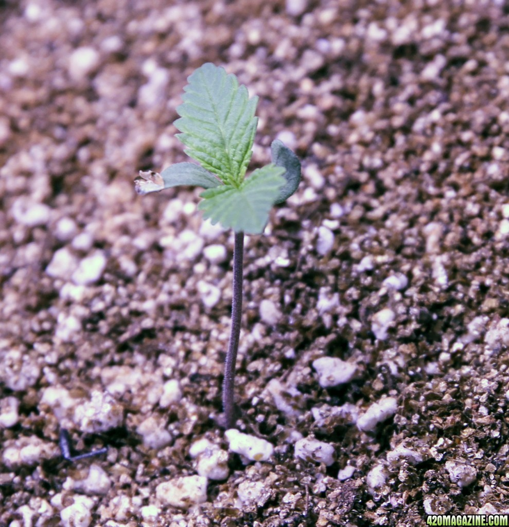 10 Plant Grow With 3 X Mars Hydro Led Amp Autopot