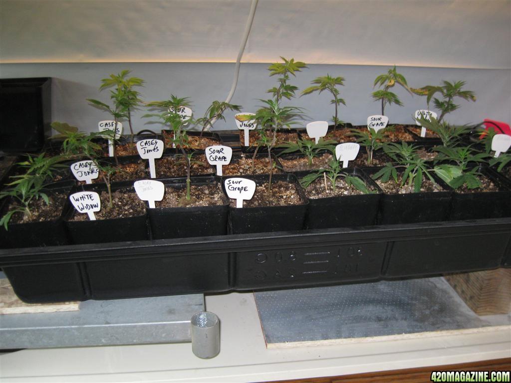 dec_21st_sad_plants_008_Large_.jpg