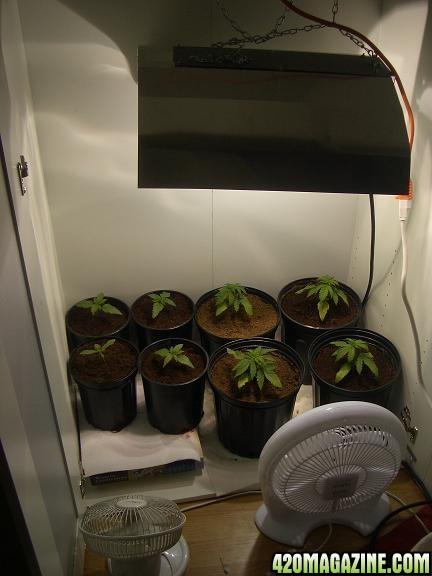 grow3-1_002pb.JPG