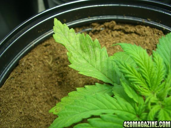 grow3-1_005pb.JPG