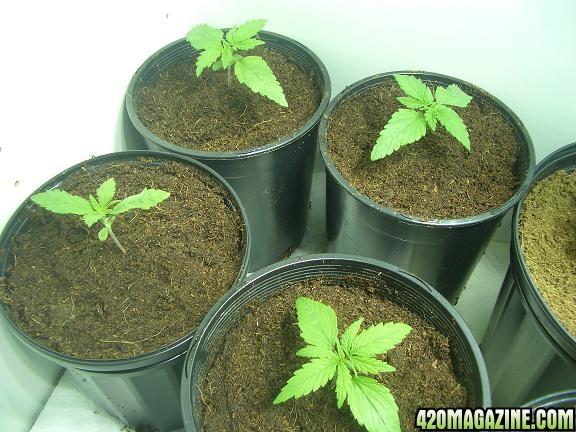 grow3-1_008pb.JPG