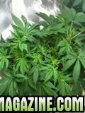 grow39.jpg