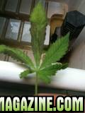 grow_14.jpg