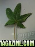 grow_22.jpg